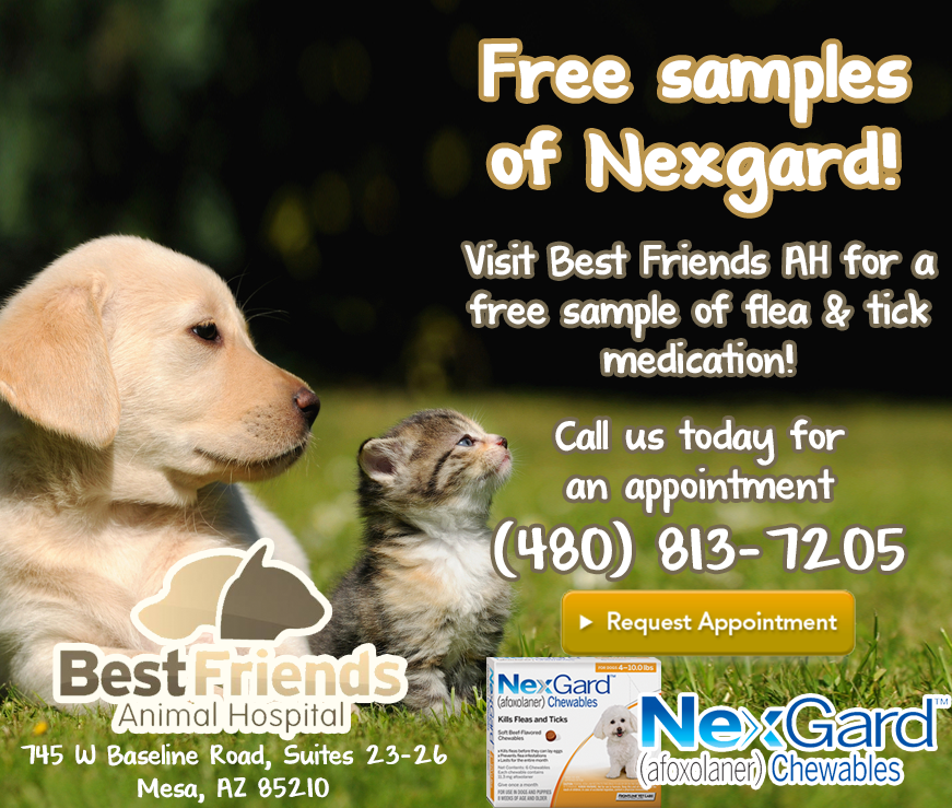 Free Samples of Nexgard!